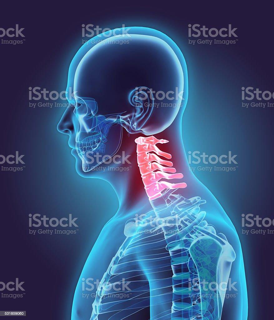 3D illustration of Cervical Spine, medical concept. stock photo