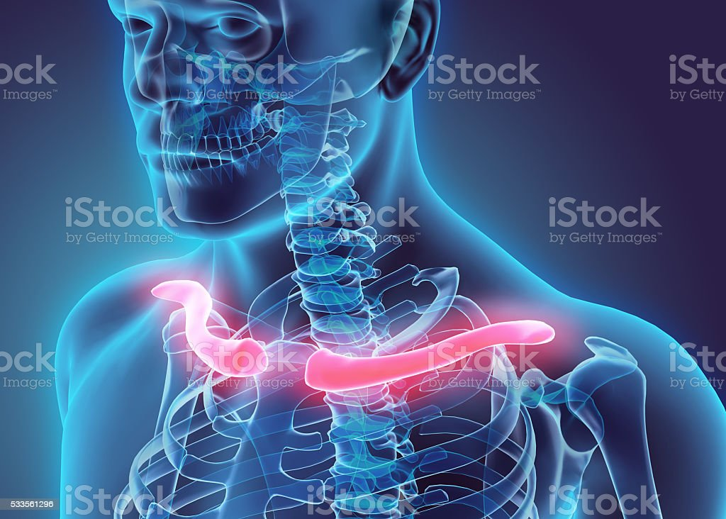 3D illustration of Clavicle, medical concept. stock photo
