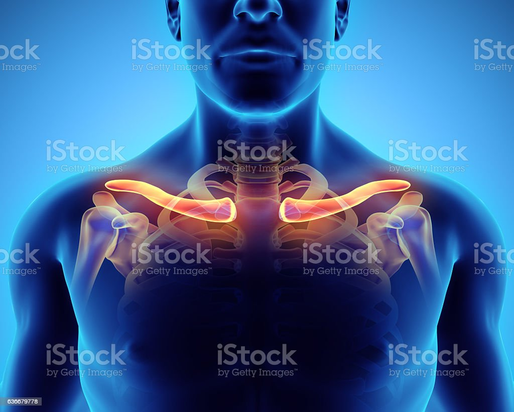 3D illustration of Clavicle, medical concept. vector art illustration