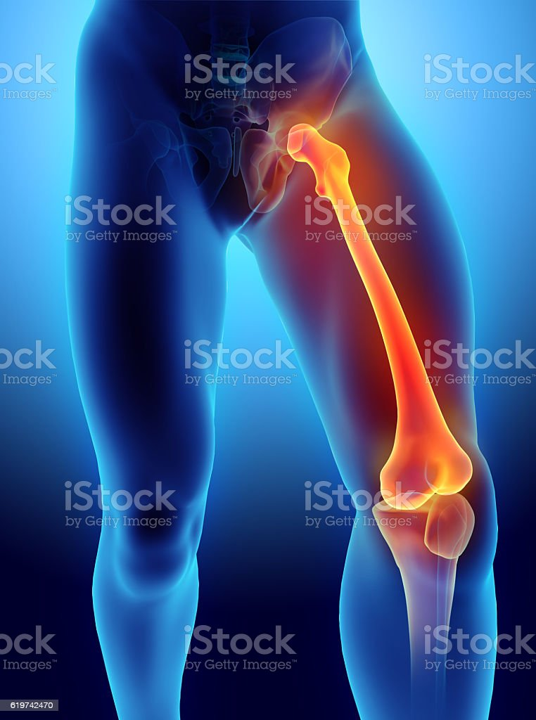3D illustration of Femur, medical concept. stock photo