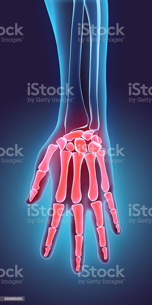 3D illustration of Hand Skeleton, medical concept. stock photo