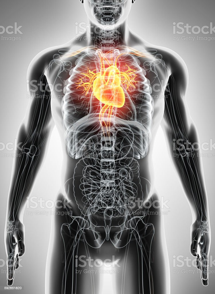 3D illustration of Heart, medical concept. stock photo