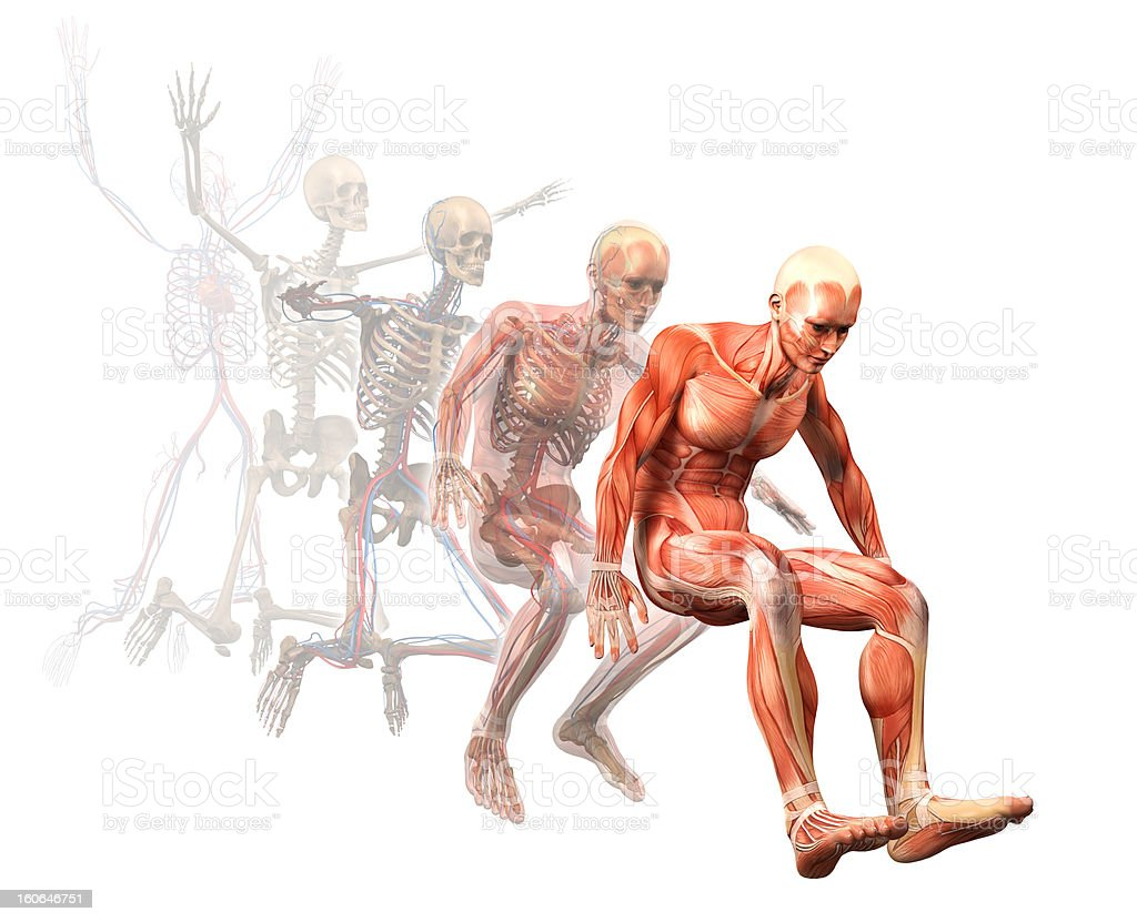 Illustration of human muscles while jumping royalty-free stock photo