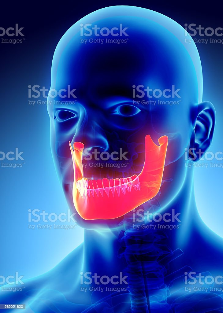 3D illustration of Mandible, medical concept. stock photo