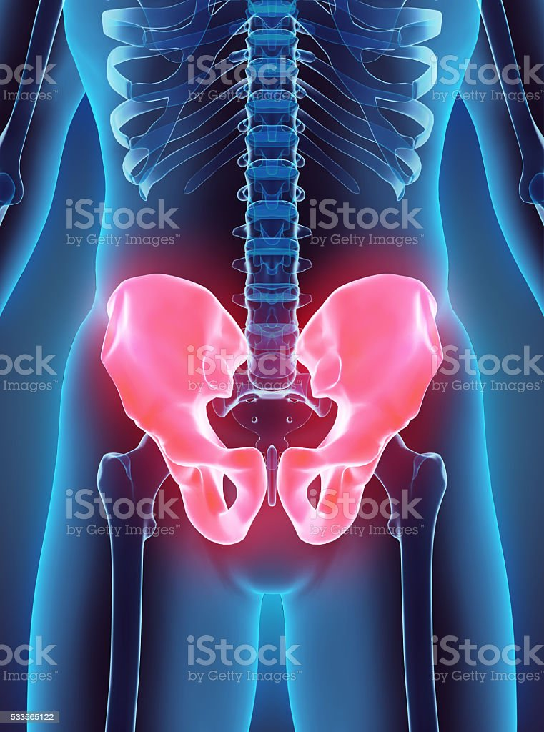 3D illustration of Pelvis, medical concept. stock photo