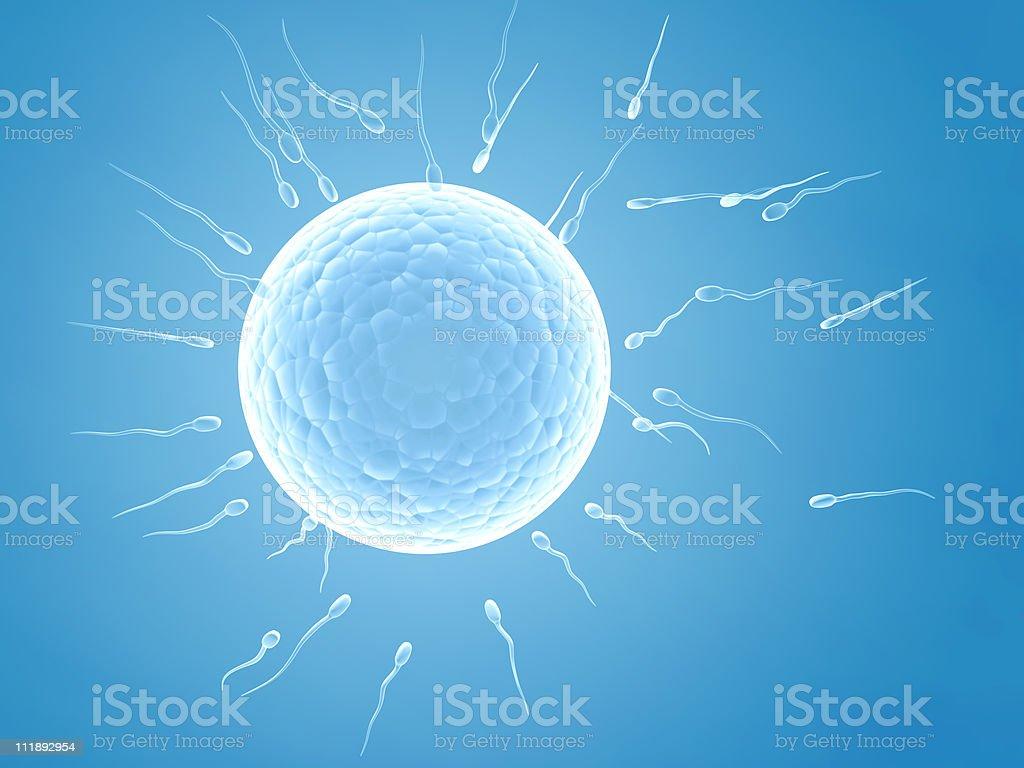 Illustration of spermatozoons floating towards an ovule stock photo