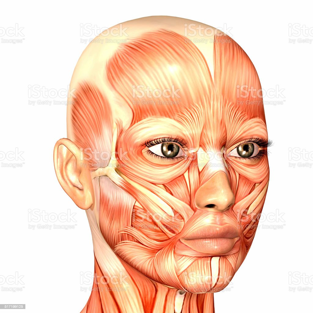 Illustration of the anatomy of a female human face stock photo