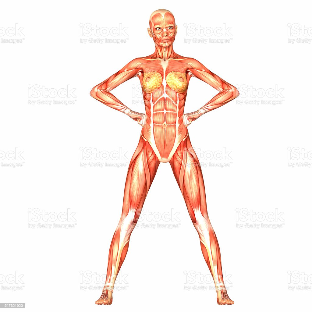 Фото девушек разными частями тела