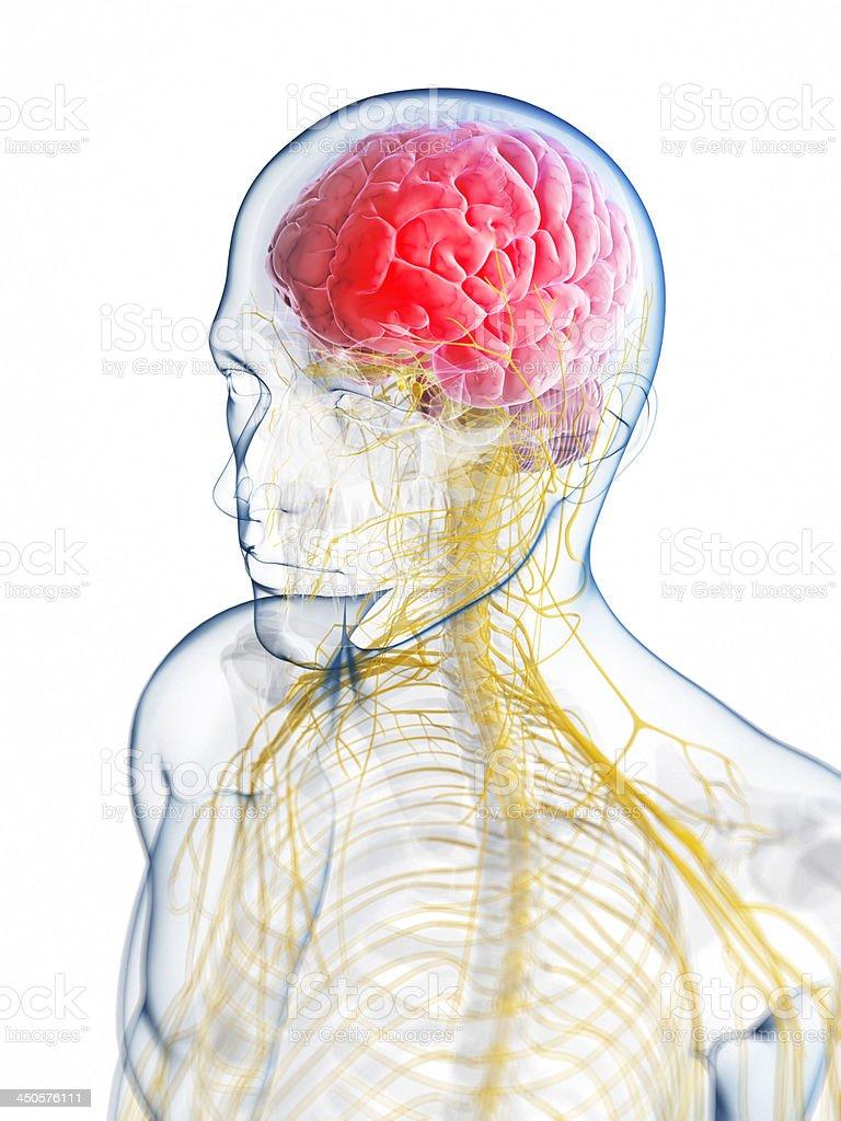 Illustration of the brain neurology of a headache stock photo