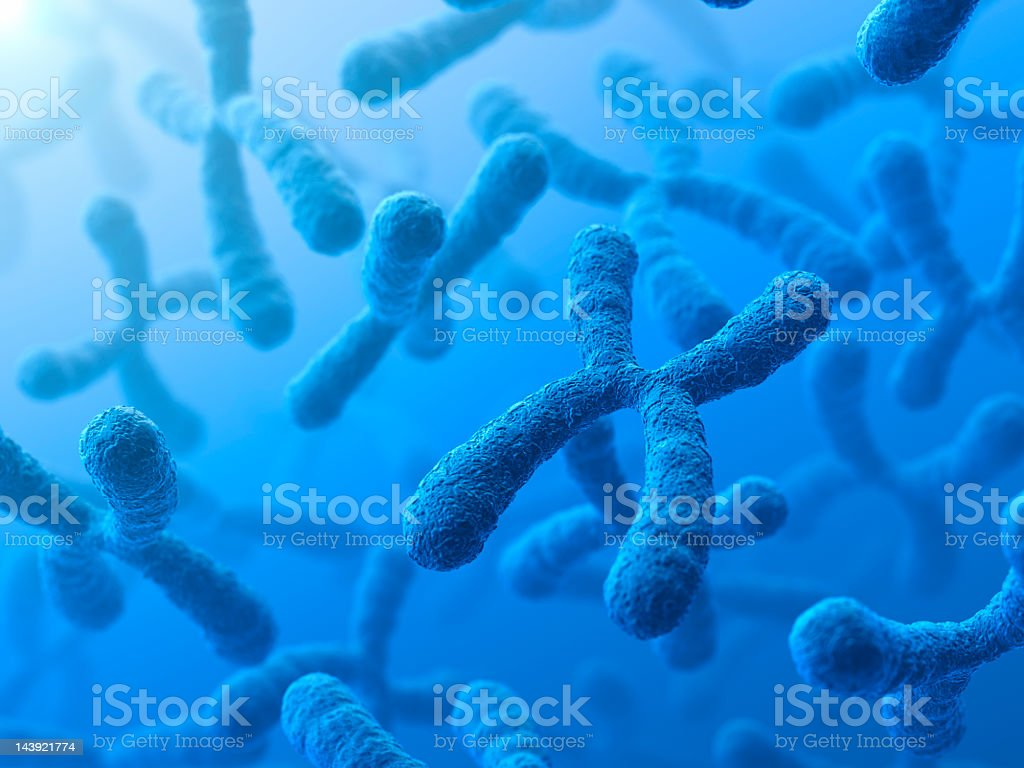 3D illustration of X Chromosomes stock photo