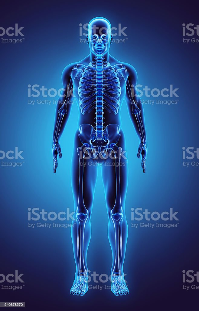 3D illustration Part of Human Skeleton, medical concept. stock photo