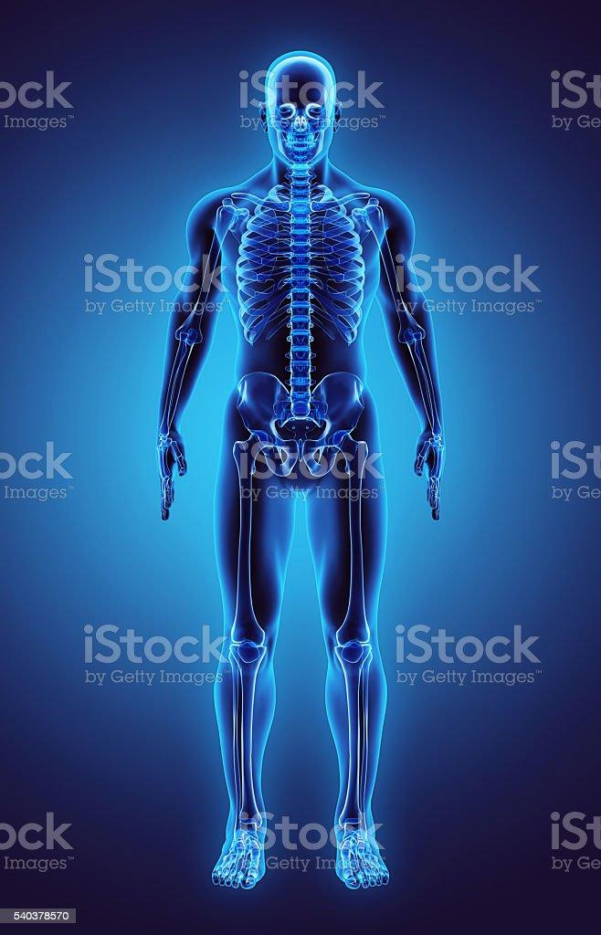 3D illustration Part of Human Skeleton, medical concept. stock photo
