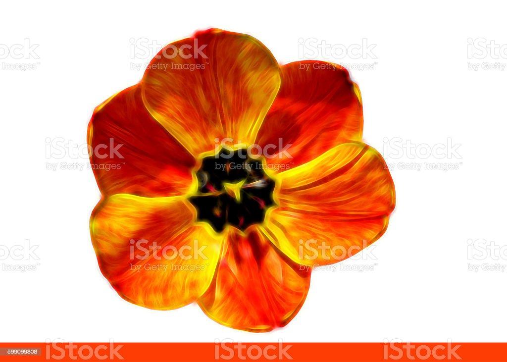 Illustration einzelne rotgelbe Tulpe stock photo