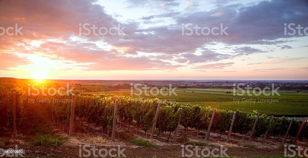 Ilok Sunset stock photo