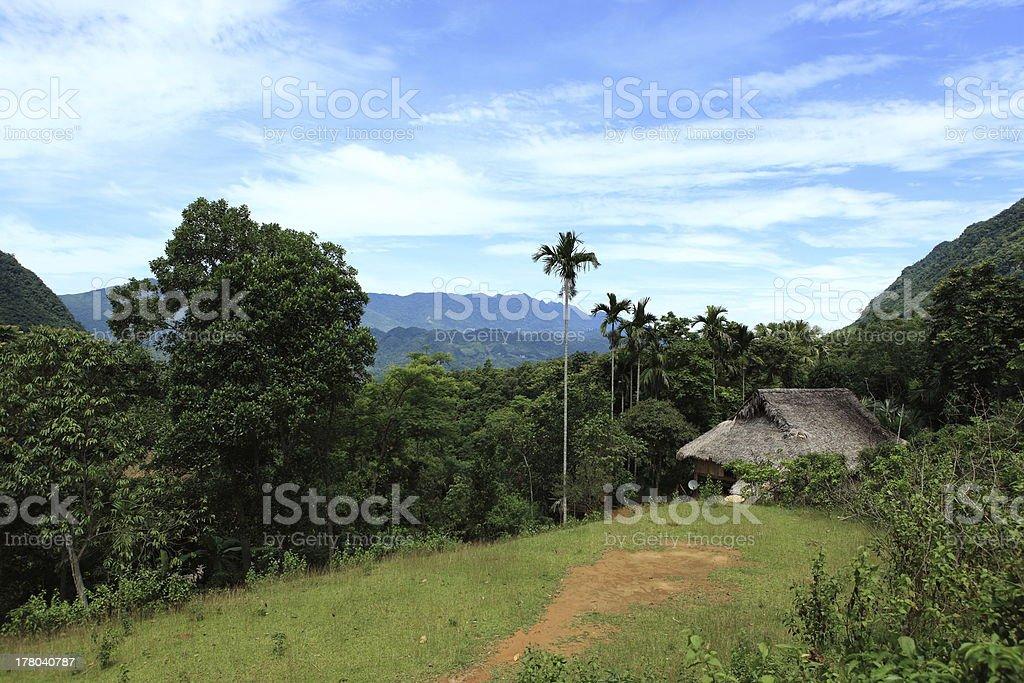 Im Dschungel von Vietnam stock photo