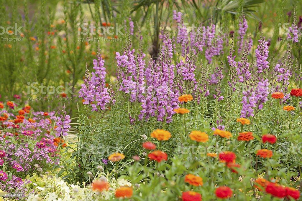 Im Garten royalty-free stock photo