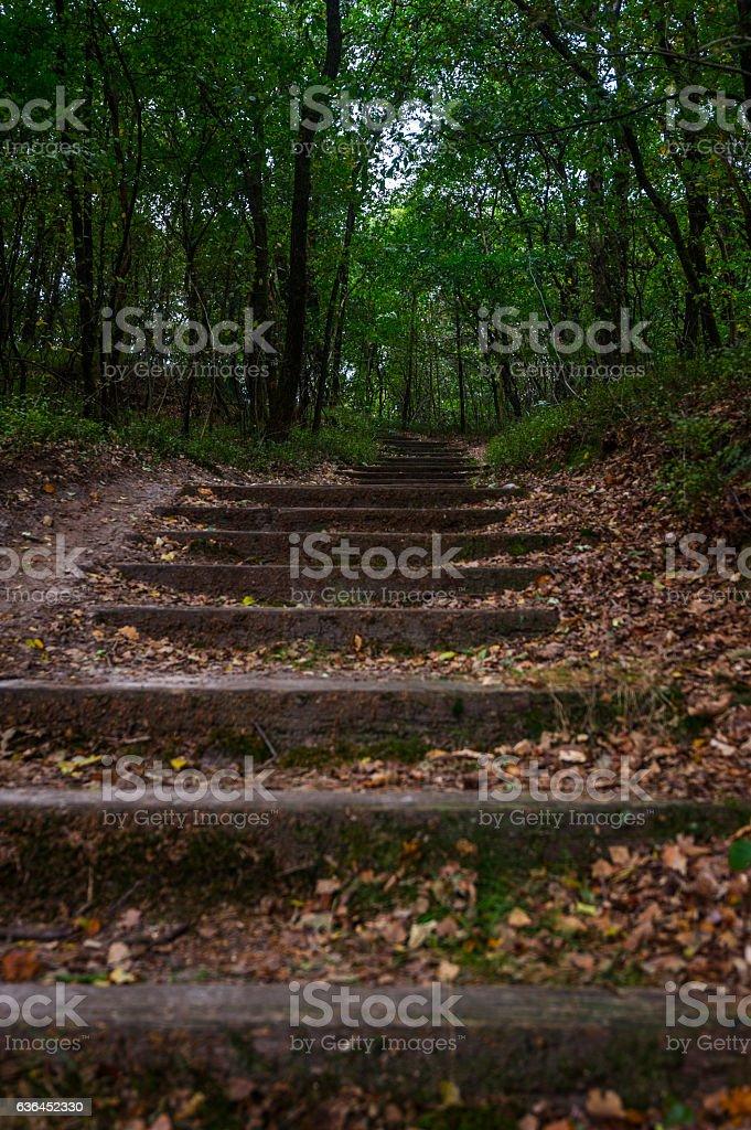 Im Wanderwald Nationalpark stock photo