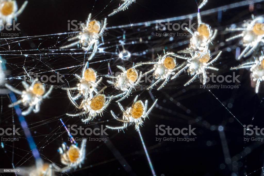 Image blur of a bunch of baby Spiders stock photo