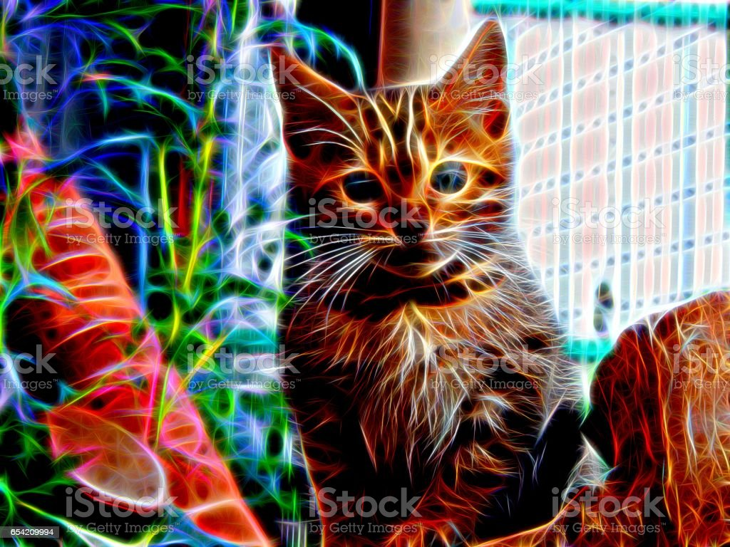 Image of a Bengal cat in neon light stock photo