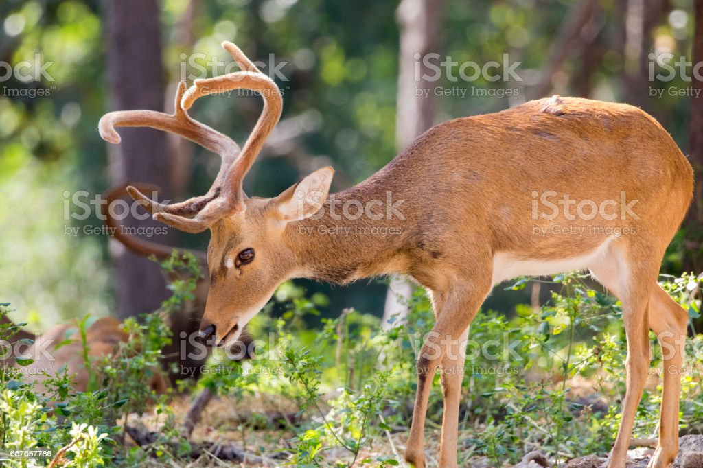 Image of a deer on nature background. wild animals. stock photo