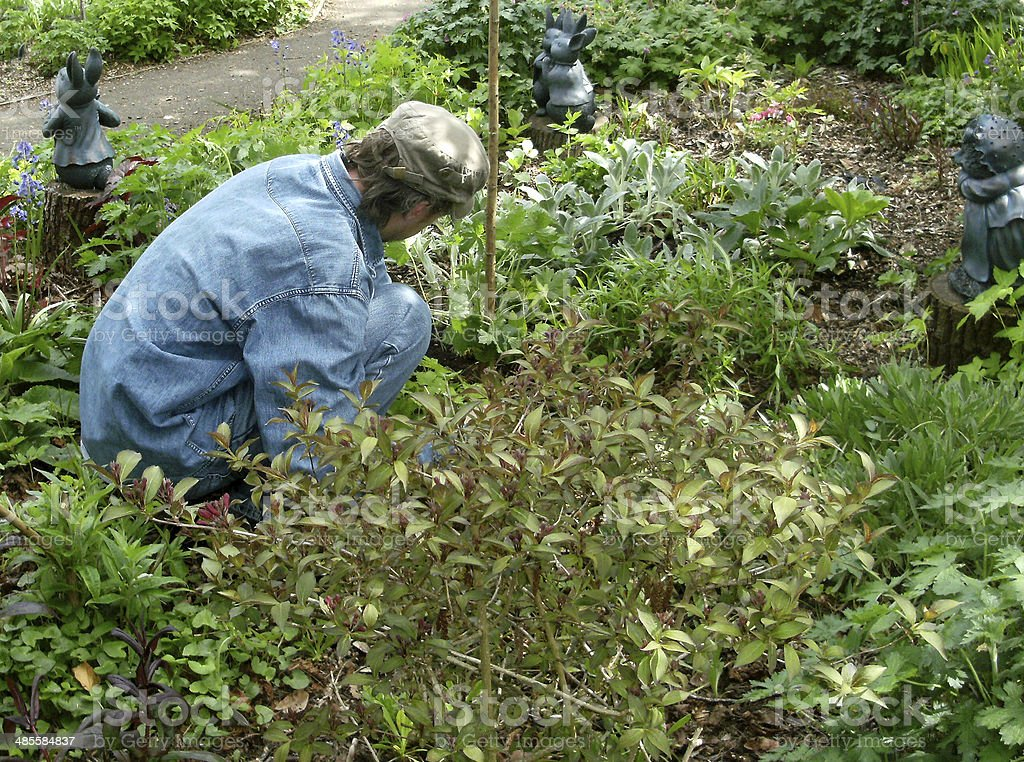 Image of a person weeding a woodland garden border stock photo