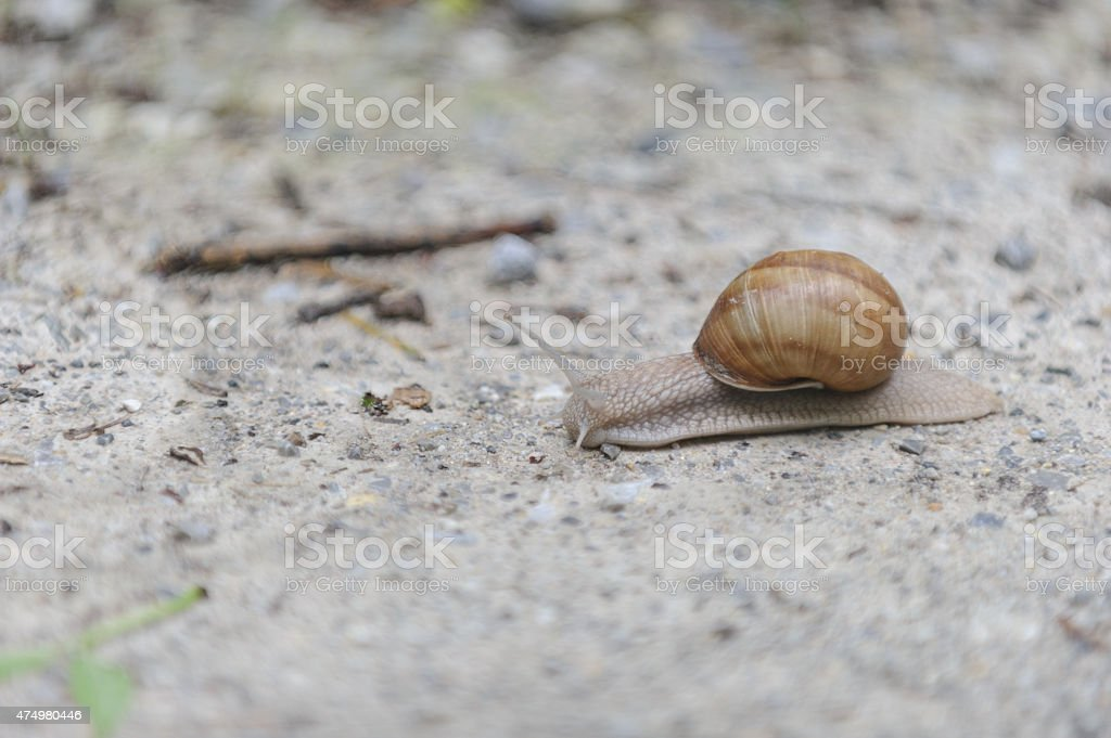 Image of a snail stock photo