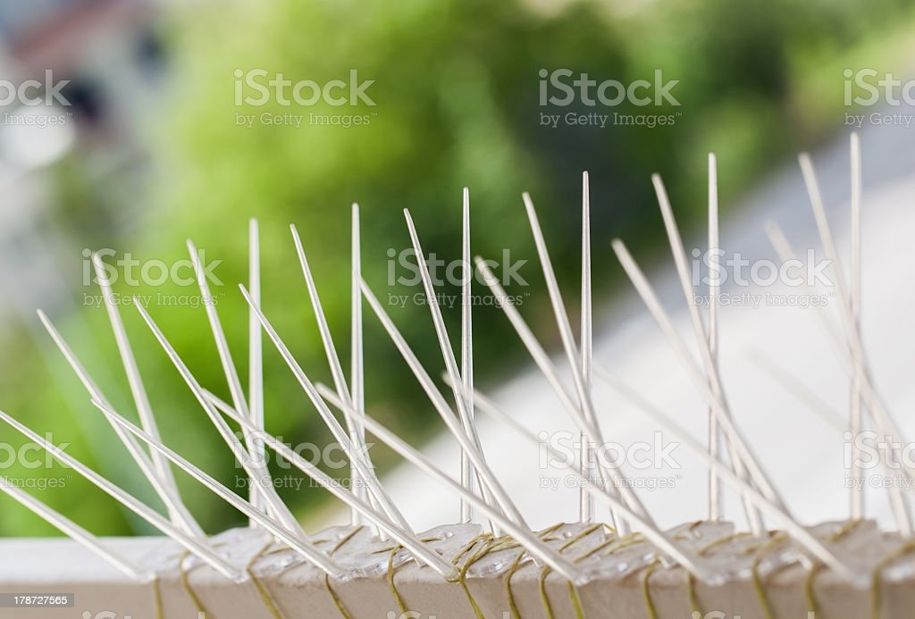 Image of a way to stop pigeons from sitting on fence stock photo