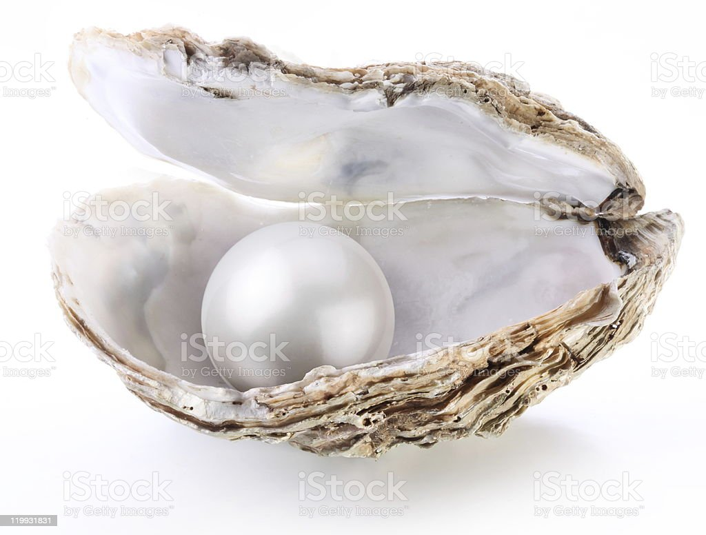 Image of a white pearl in shell. stock photo