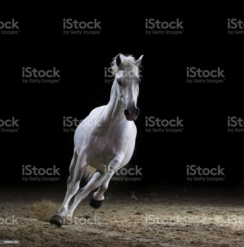 Image of a white stallion galloping on sand  stock photo