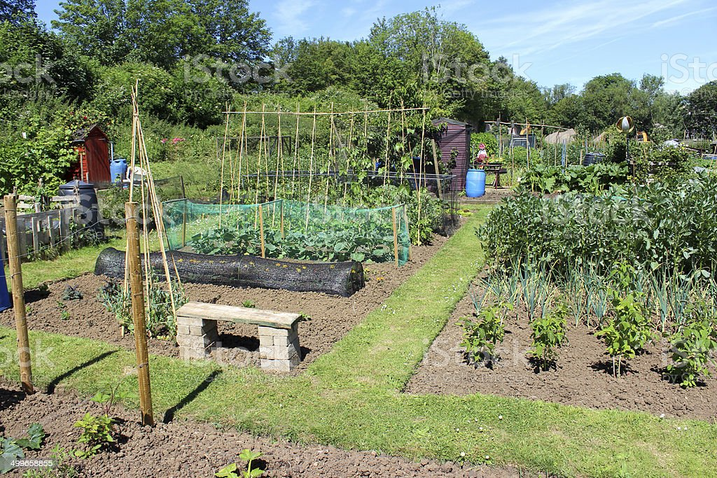 Image of allotment vegetable garden with bench, cloches, grass path royalty-free stock photo