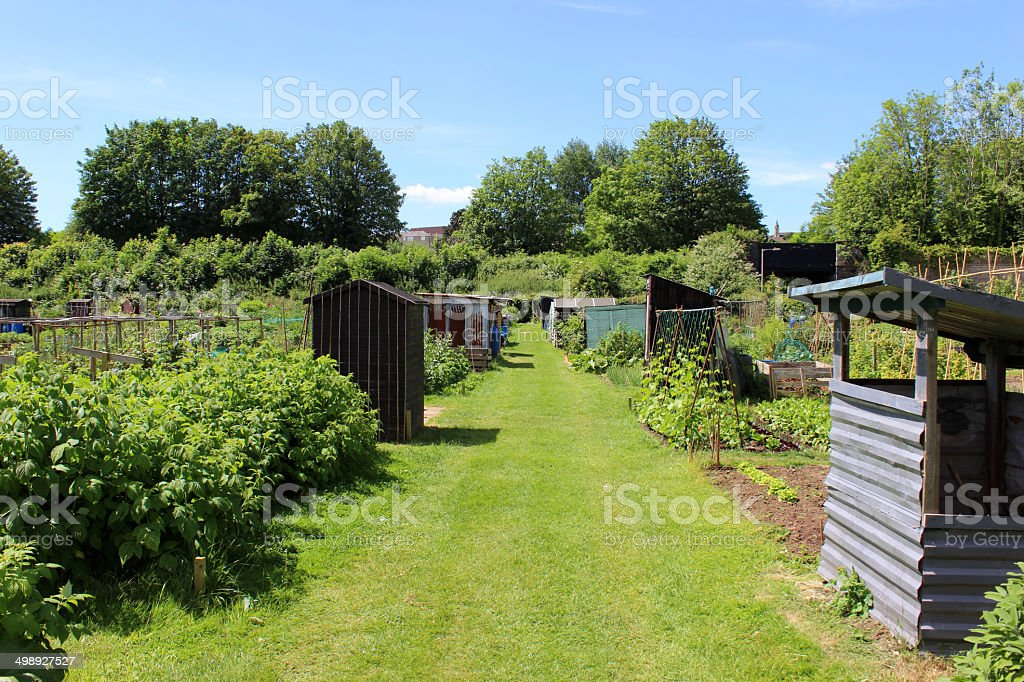 Image of allotment vegetable garden with corrugated iron shed, lawn royalty-free stock photo