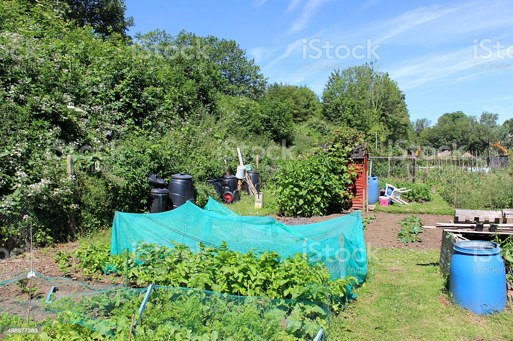 Image of allotment vegetable garden with netting cloches, compost bin stock photo