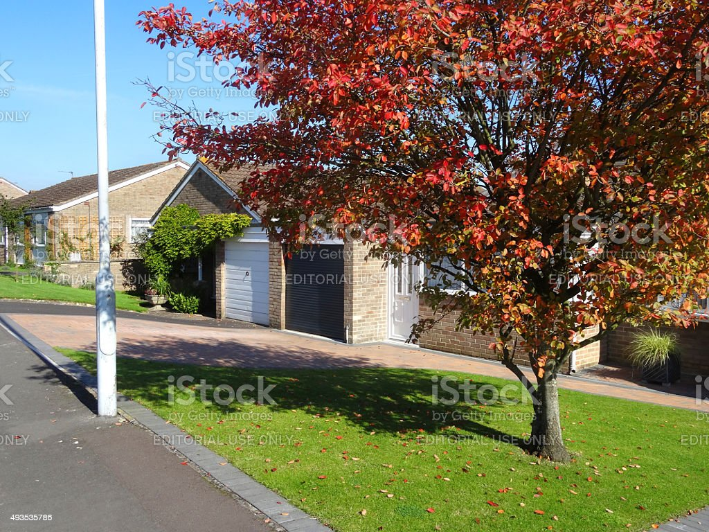 Image of amelanchier tree with autumn foliage by bungalows / houses stock photo