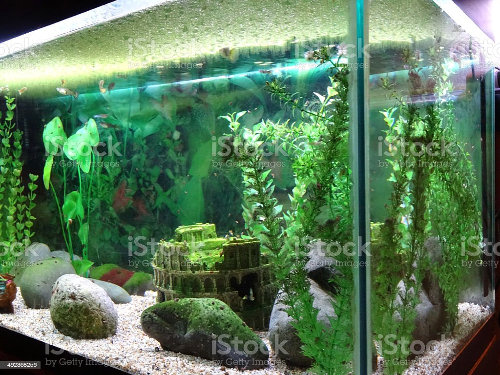 Freshwater fish tank equipment - Animal Freshwater Fish Lighting Equipment Liquid Spotlight