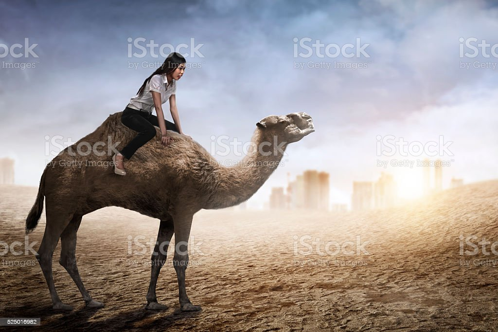 Image of asian business woman riding camel stock photo