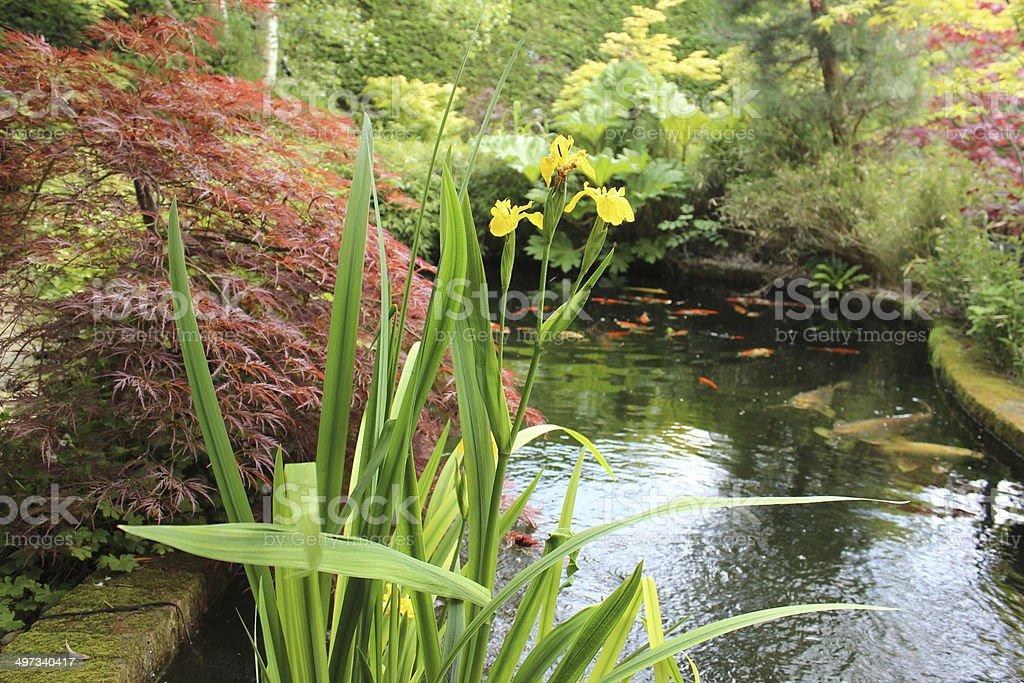 Image of beautiful pond in landscaped Japanese garden, koi carp royalty-free stock photo