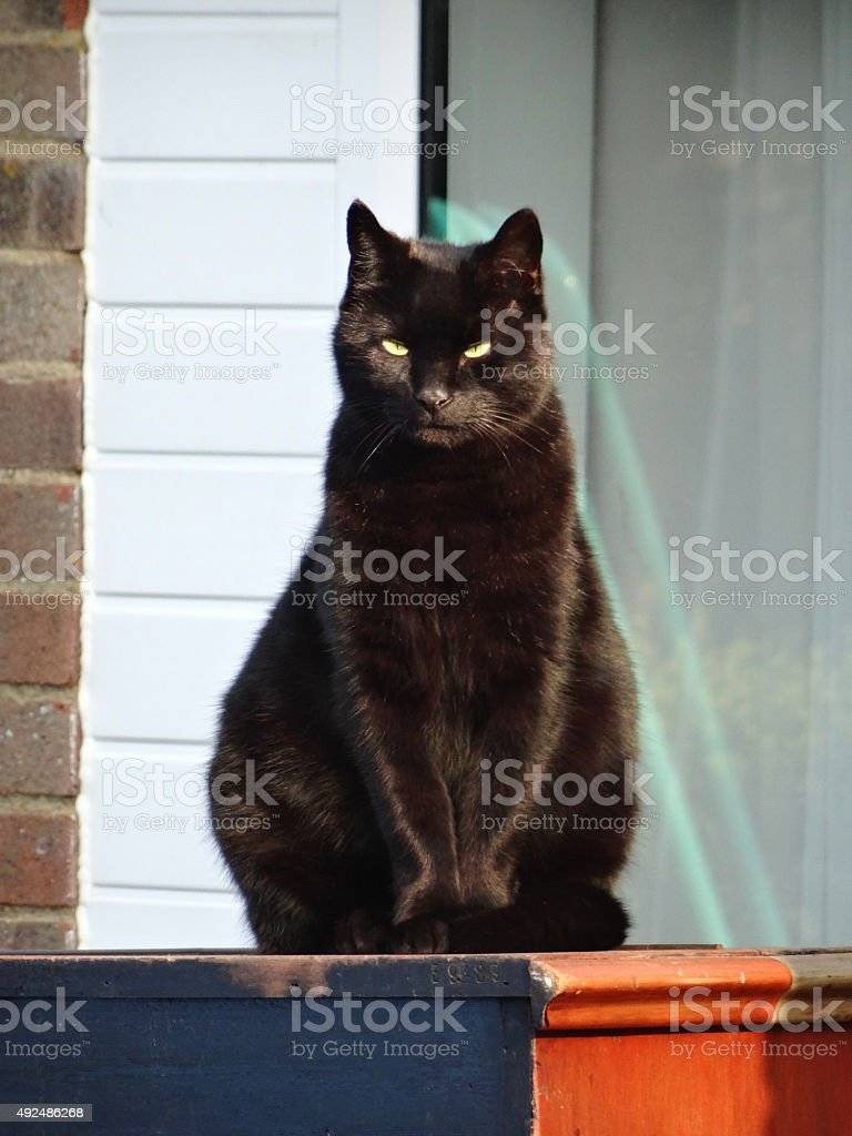 Image of black cat sitting on wooden-box in sun, staring-forwards stock photo