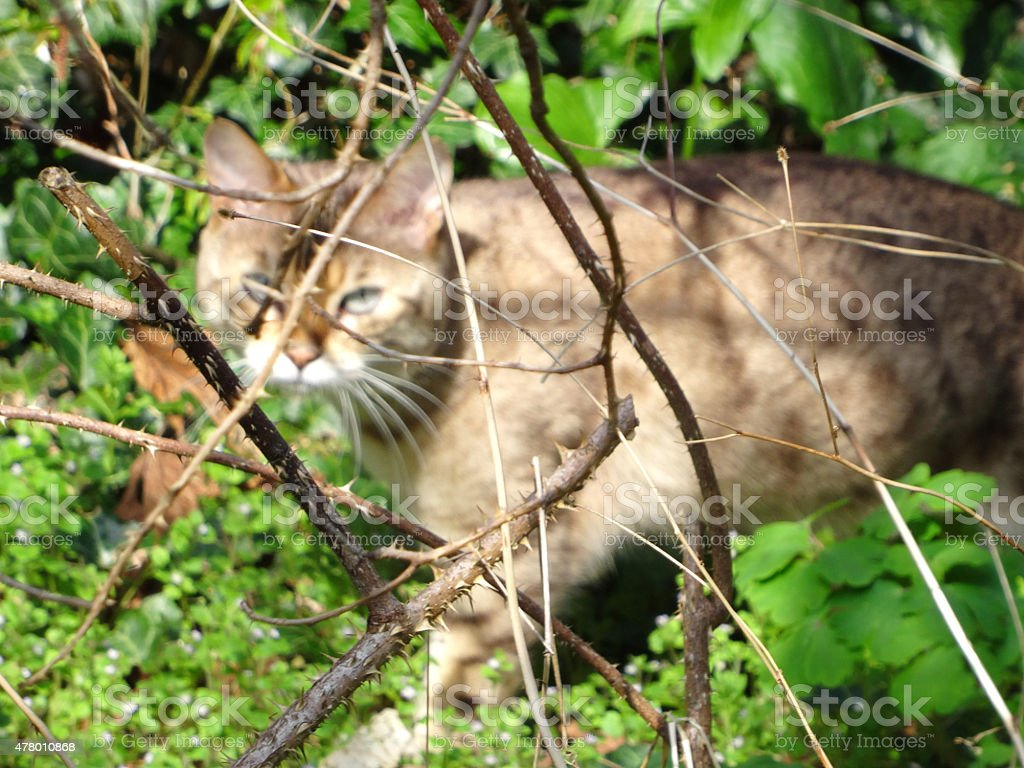 Image of brown pet cat in background, hunting / stalking birds stock photo