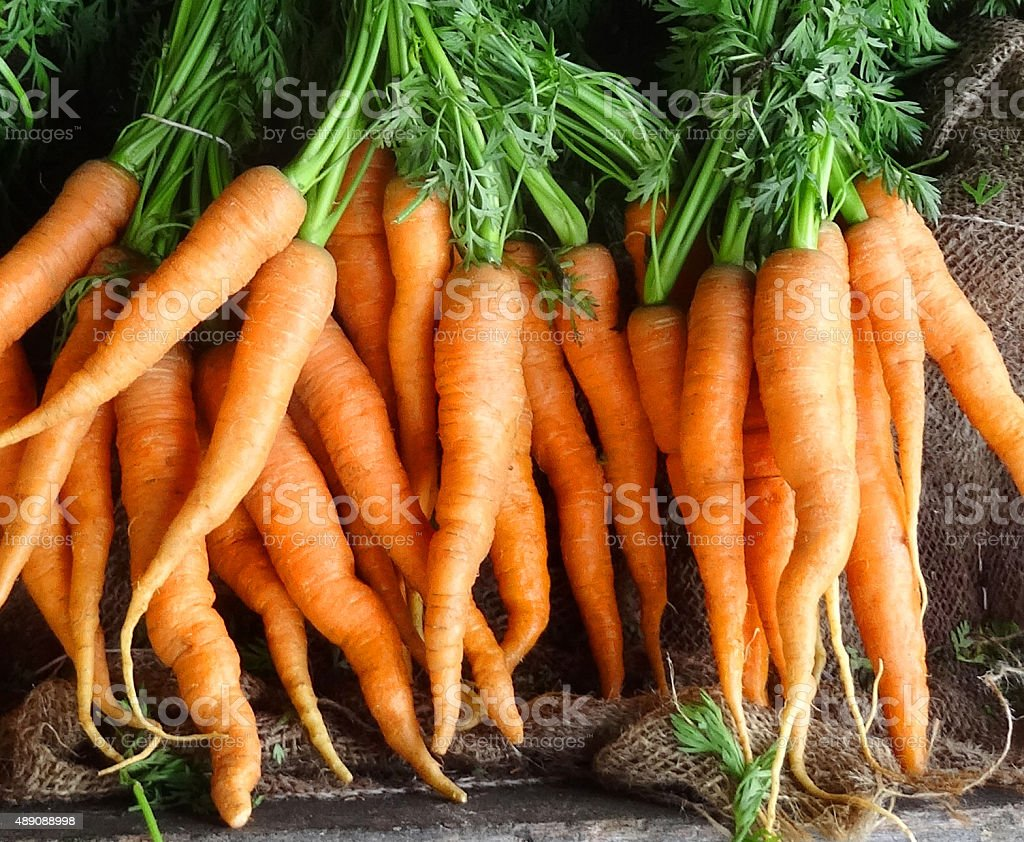 Image of carrots with their green carrot tops tied up stock photo