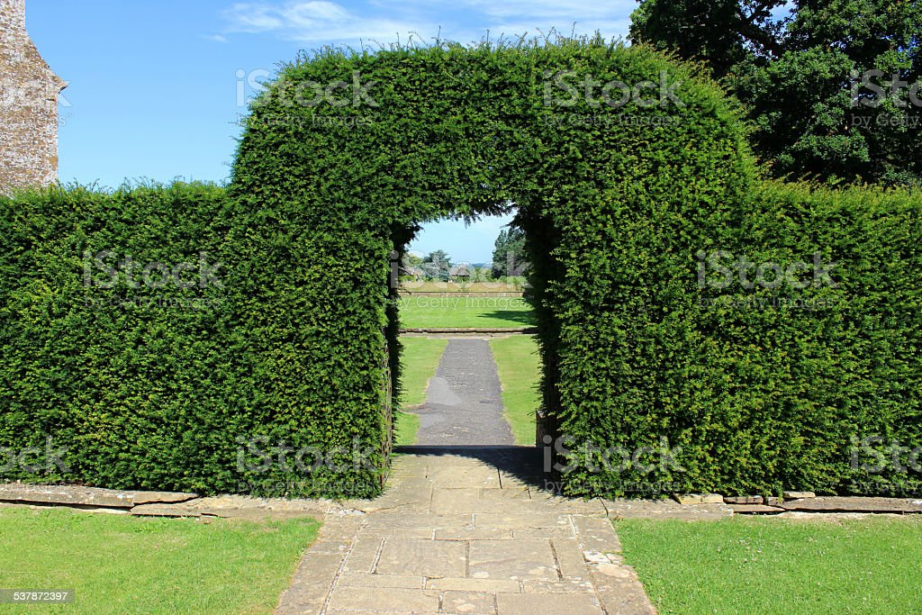 Image of clipped yew tree archway / topiary arch in garden stock photo