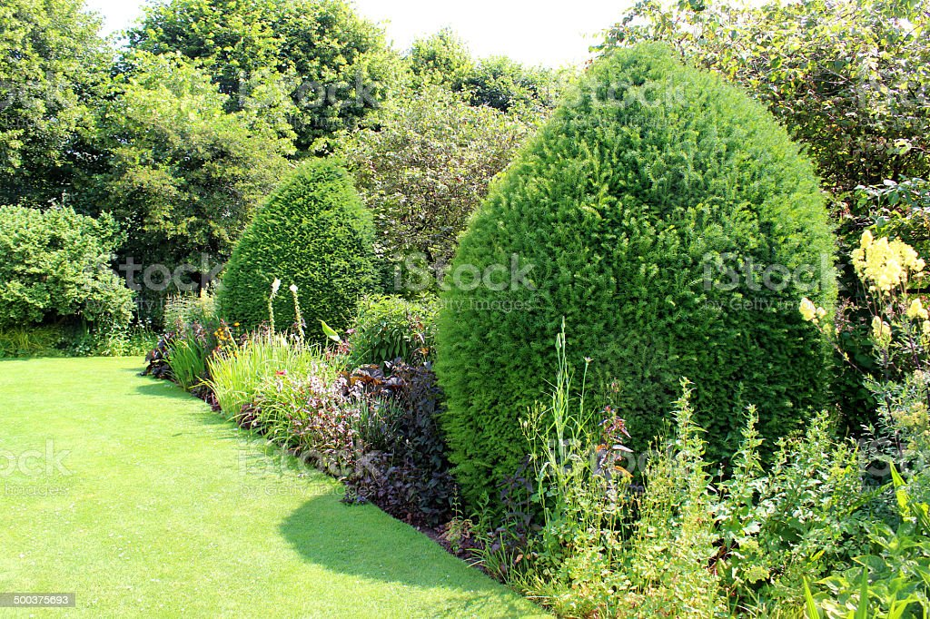 Image of clipped yew trees, topiary in garden flower border stock photo