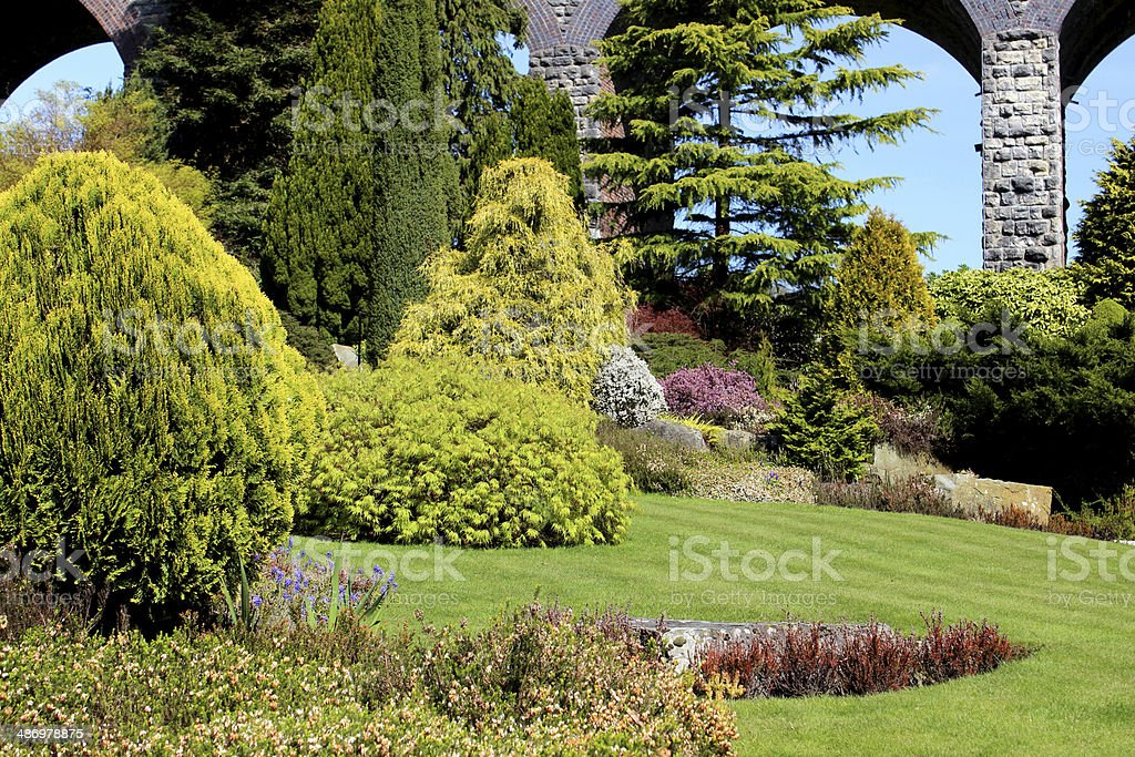 Image of conifers in rock garden, including cypress / cedar trees royalty-free stock photo