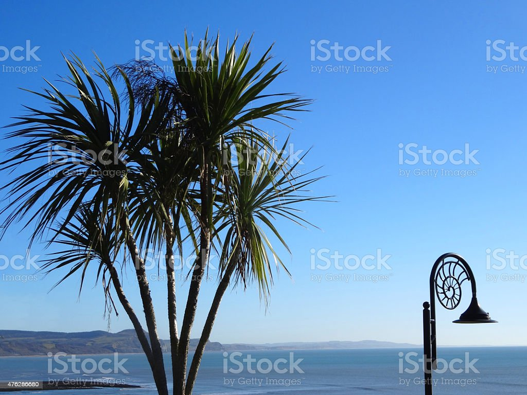 Image of cordyline australis (cabbage palm tree) growing by sea stock photo