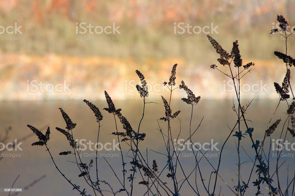 Image of dried buddleia flowers (Buddleja davidii) against quarry lake stock photo
