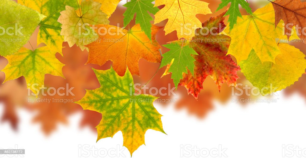 image of dry autumn leaves closeup stock photo