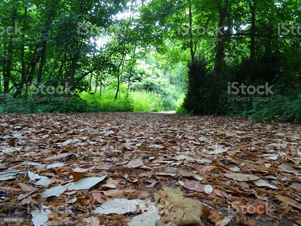 Image of dry fallen leaves on woodland pathway, diminishing perspective stock photo