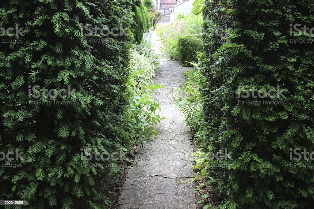 Image of English yew hedge (taxus-baccata), pathway to secret garden stock photo