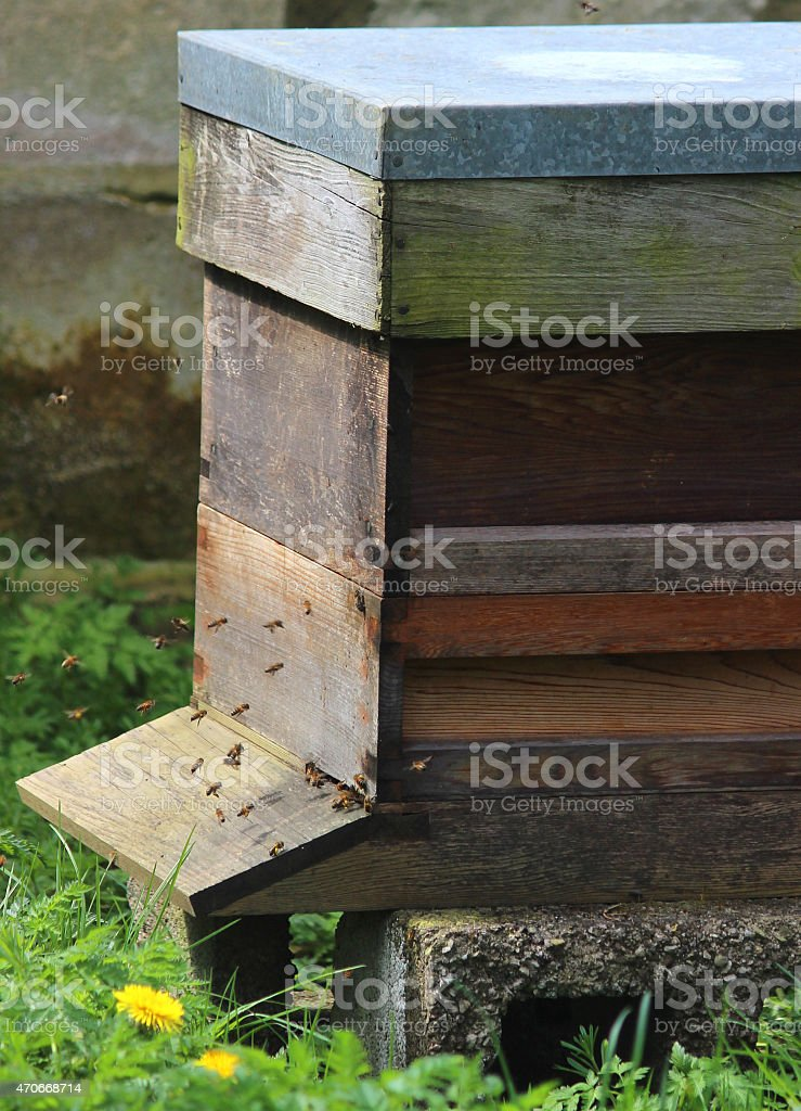 Image of entrance to homemade wooden beehive, showing honey bees stock photo