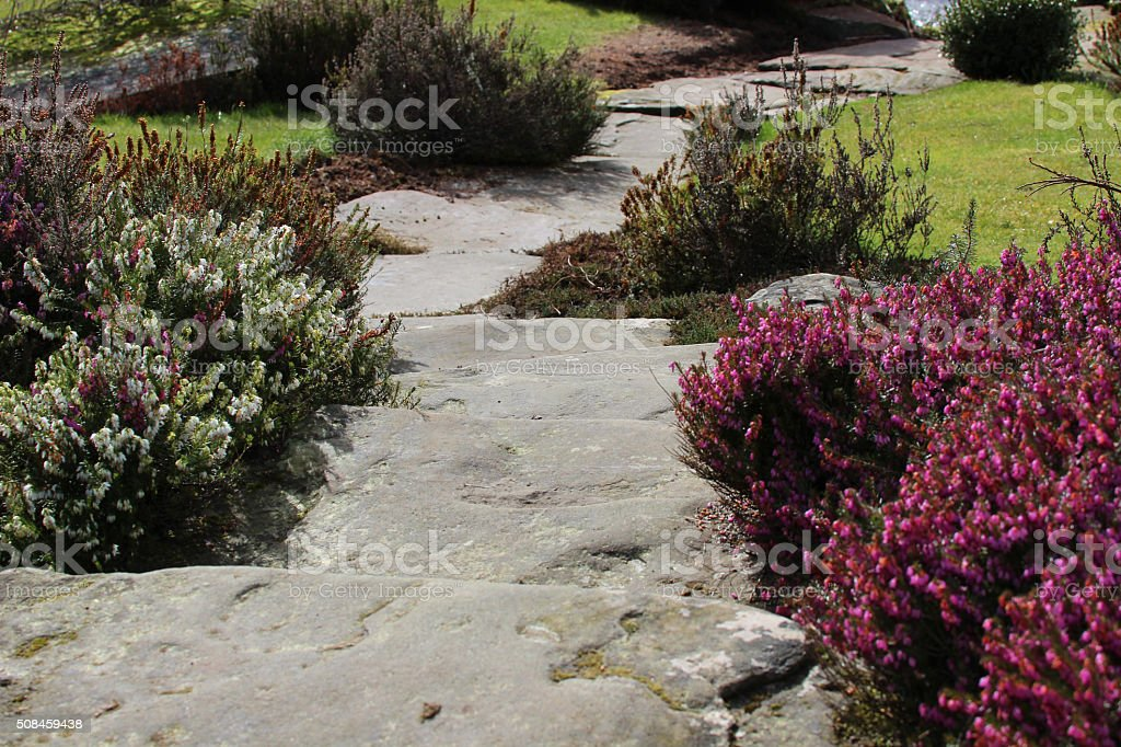 Image of flagstone stepping stones forming garden pathway, heather flowers stock photo