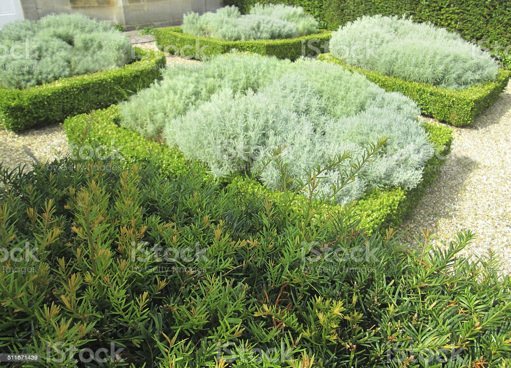 Image of formal knot garden, topiary box-hedging (buxus), cotton-lavender (santolina) stock photo